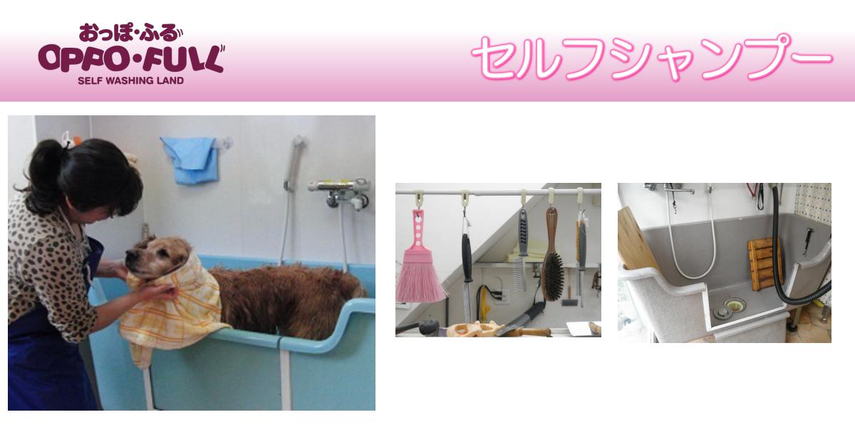 ペットホテル ペット美容室 豊中市 おっぽふる