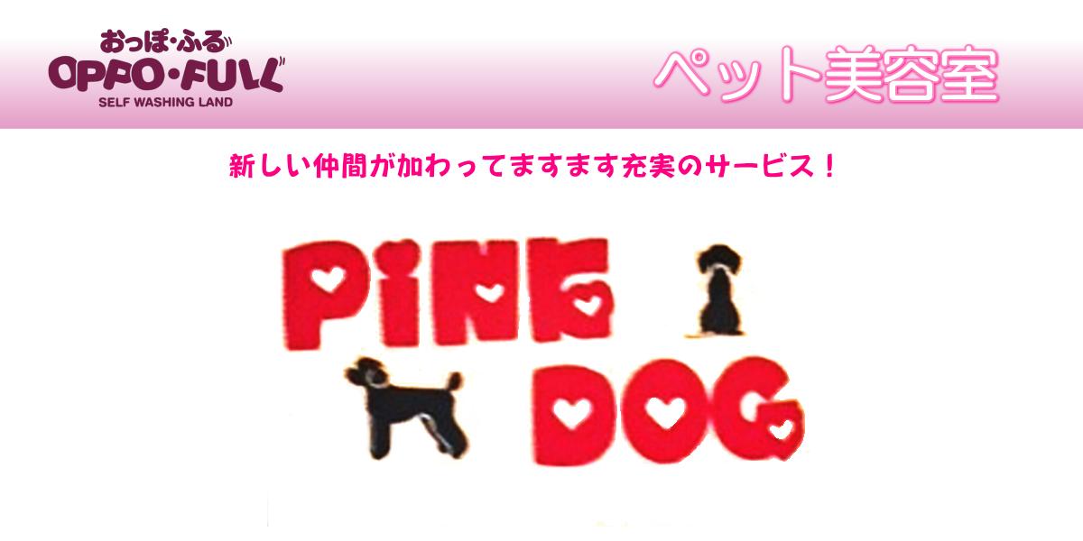 ペットホテル ペット美容室 豊中市 おっぽふる PiNK DOG